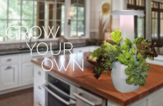 Find Fruit Bowls and Baskets for Your Kitchen Vegetable Basket